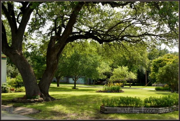 Sunday Trees - 188