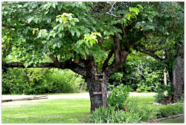 Sunday Trees - 190
