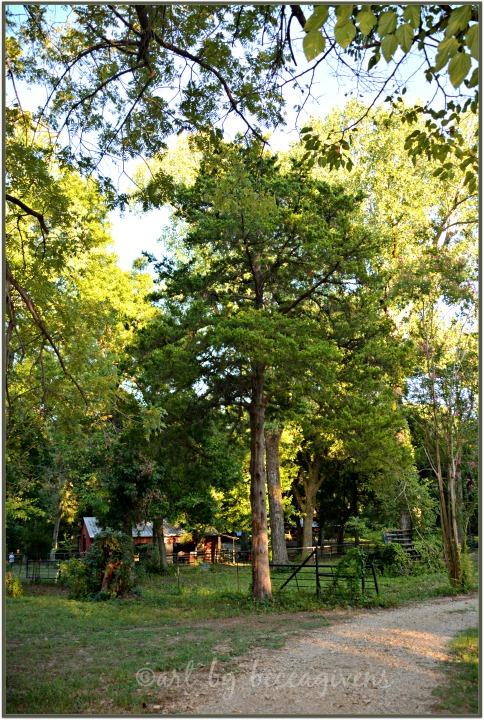 Sunday Trees - 217A