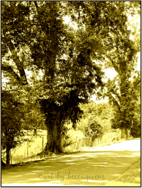 Sunday Trees - 224