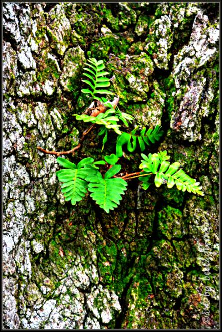 Sunday Trees - 226