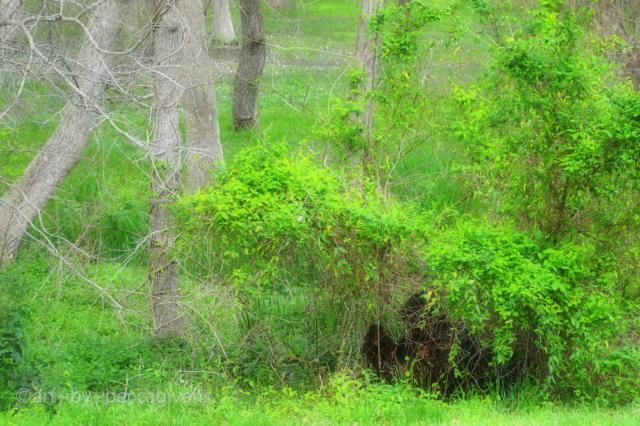 Sunday Trees - 230B - Original