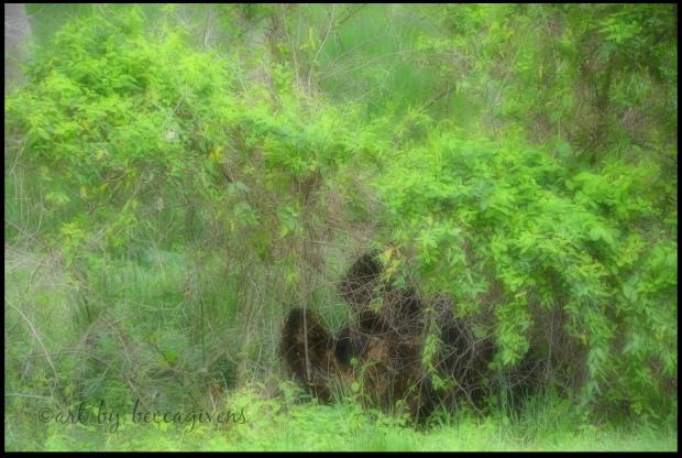 Sunday Trees - 230C Softened