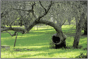 Sunday Trees - 231A
