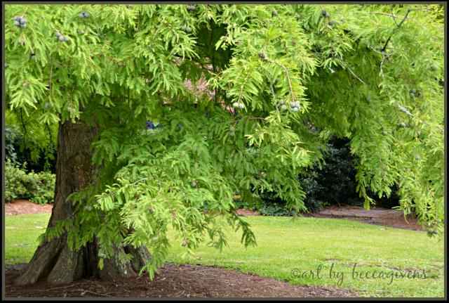 7 - Cypress Tree