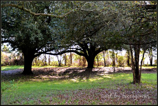 Sunday Trees - 235