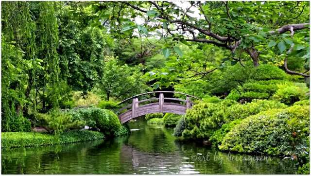 Sunday Trees - 236 - Japanese Gardens