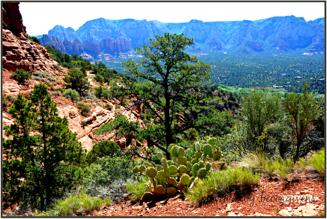 Sunday Trees - 240 - Sedona