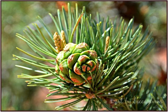Sunday Trees - 241B - Sedona