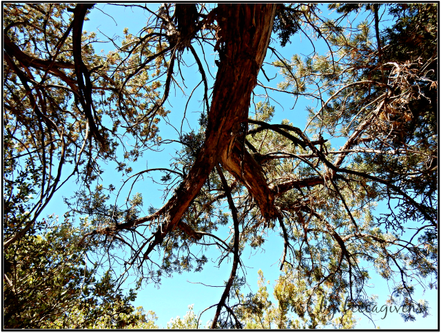 Sunday Trees - 250 - Sedona