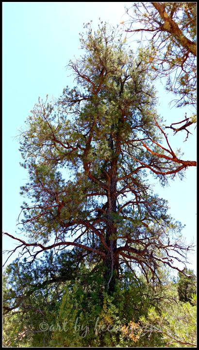 sunday-trees-255-sedona
