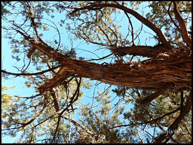 sunday-trees-259-sedona