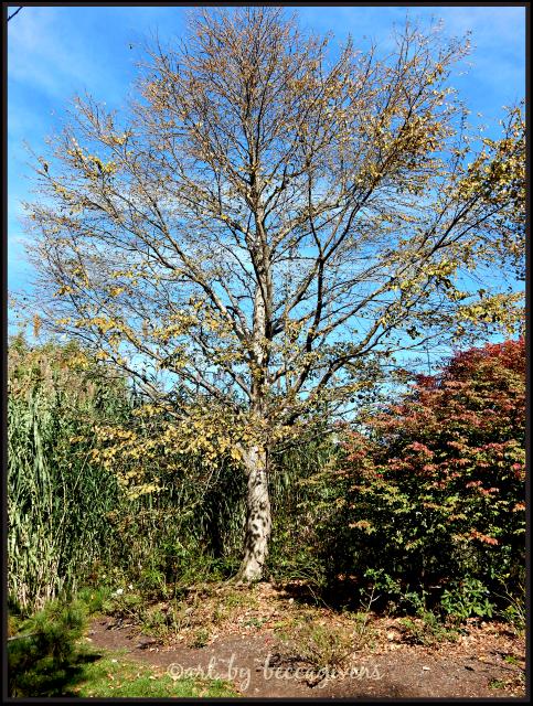 sunday-trees-262