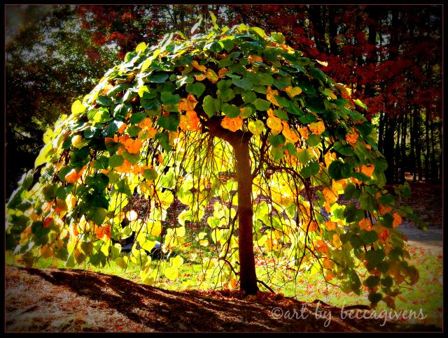 sunday-trees-268